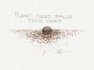 How to plant a seed ball.