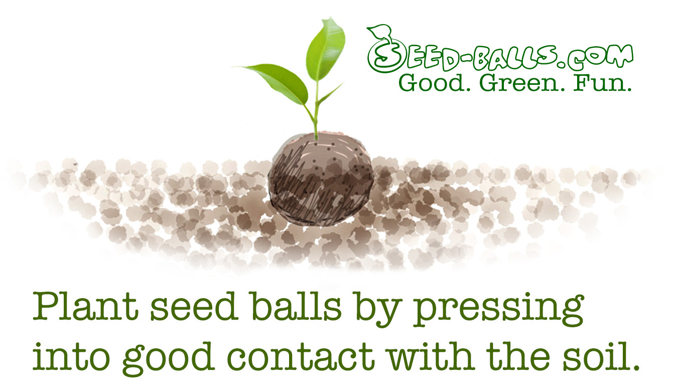 What Are Seed Balls Seed Balls Wildflower Seed Balls Herb