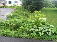 It was a lawn last year...