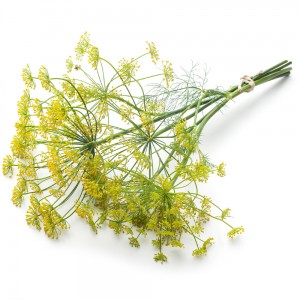 Steeped as a tea, the leaves and seeds of dill are claimed to assist in romantic difficulties.