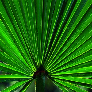 LovePlants_0004_Palmetto