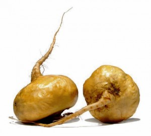 Maca, Lepidium meyenii, is a South American cruciferous veggie, not unlike a radish. It's used to treat a host of female issues and to improve fertility in livestock, as well.
