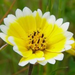 Tidy tips is great for wildflower seed balls